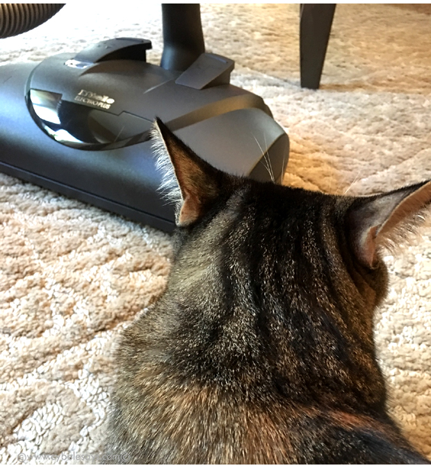 Darla-and-the-Miele-Complete-C3-Cat-&-Dog-Powerbrush